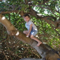 Lockie is climbing trees